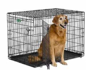 What Size Dog Crate Do You Need Which Type Is Best