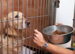 A Golden Retriever being fed through a crate door