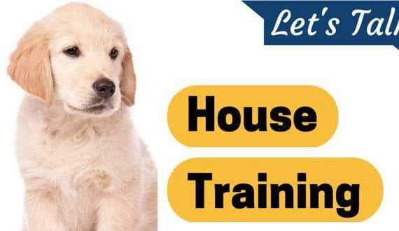 Let's talk house training written next to a golden retriever puppy on white background