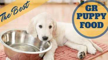 A golden retriever puppy lying with head resting on empty food bowl