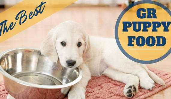 the best puppy food for golden retrievers