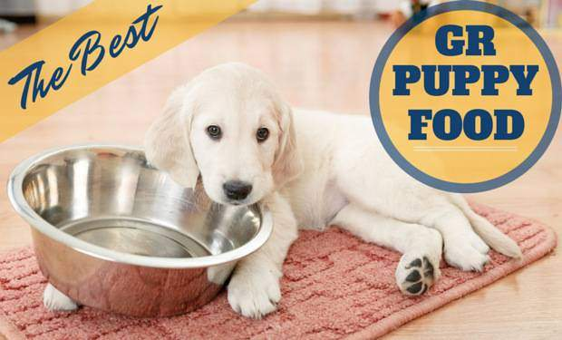 A GR puppy with head resting on an empty bowl with the best puppy food written beside it