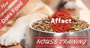 How does food affect house training writen across a large bowl of food and golden retriever's paw