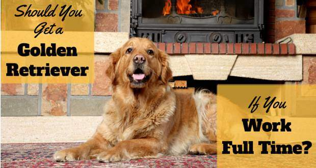 A golden retriever lying in front of a fireplace and brick hearth