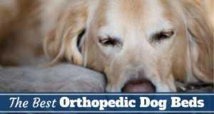 Best orthopedic dog beds written beneath a golden retriever on a bed
