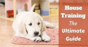 House training the ultimate guide written beside a golden retriever puppy