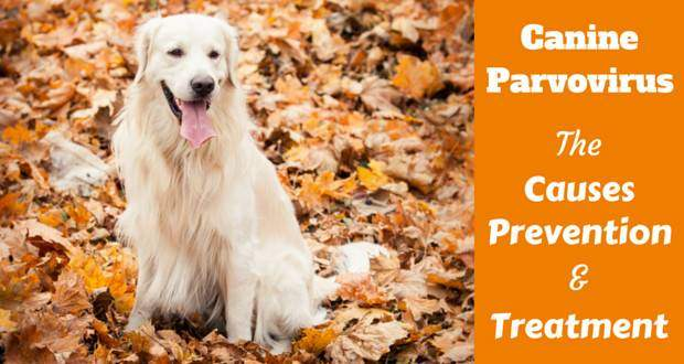 A golden retriever sitting in brown autumnal leaves