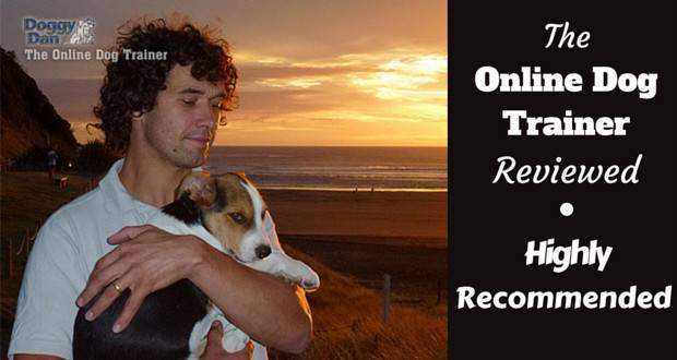 Online dog trainer review written beside Dan with his pupy Moses on a beach in front of a sunset