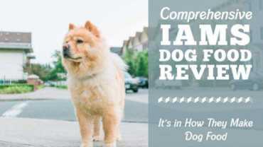 iams dogs food rewview