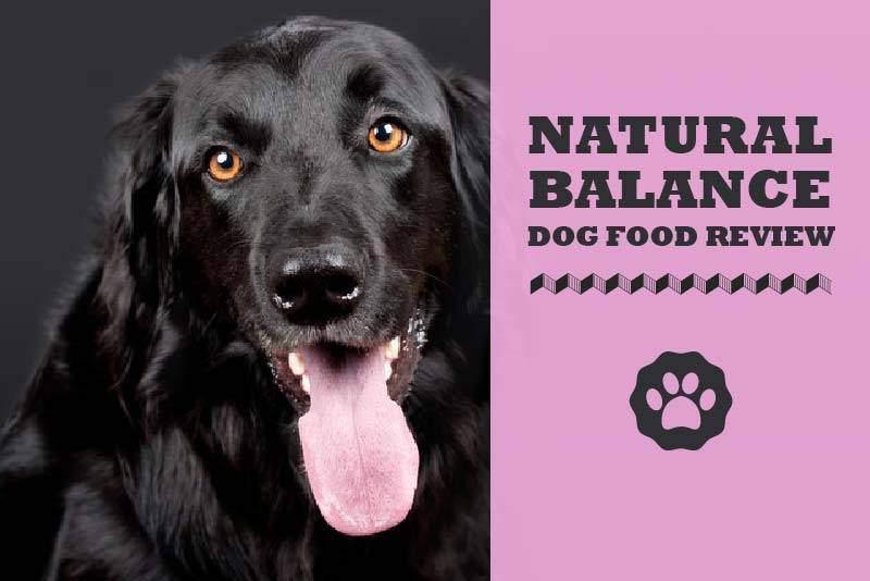 Natural Balance Dog Food Recall