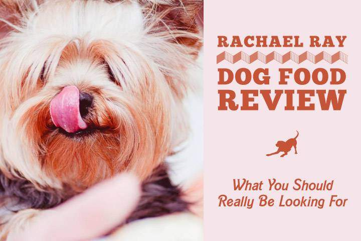 Rachael Ray Dog Food Review What You Should Really Be Looking For