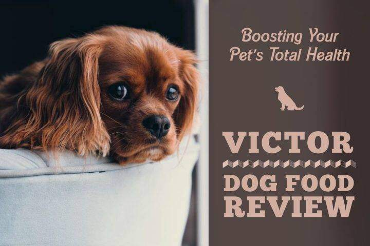 Victor Dog Food Review Boosting Your Pup S Total Health For 2019