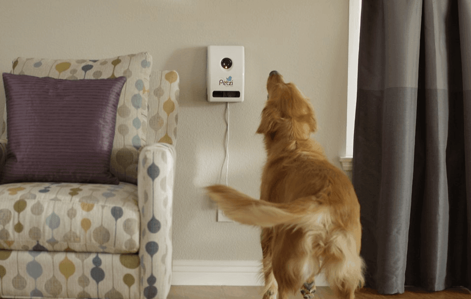Do You Ever Wonder What Your Dog Does All Day While Re At Work Thanks To Modern Technology Gadgets And S Can Easily Keep Tabs On Pet