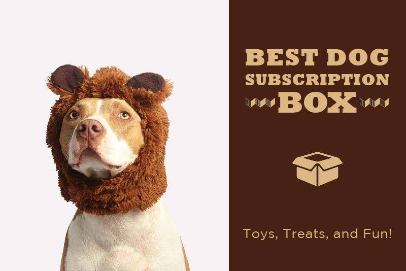 Best Dog Subscription Box for Monthly Toys, Treats, and Fun!