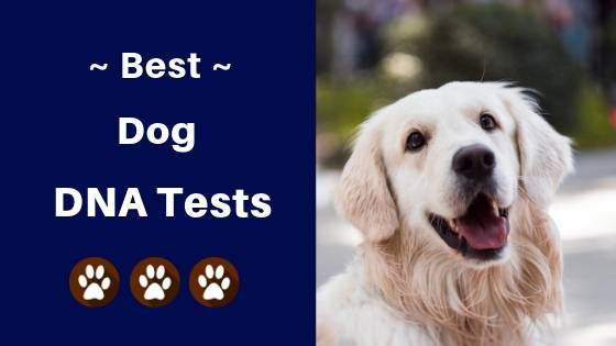 best dog dna tests reviews