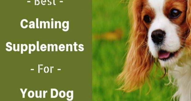calming supplements for your dog