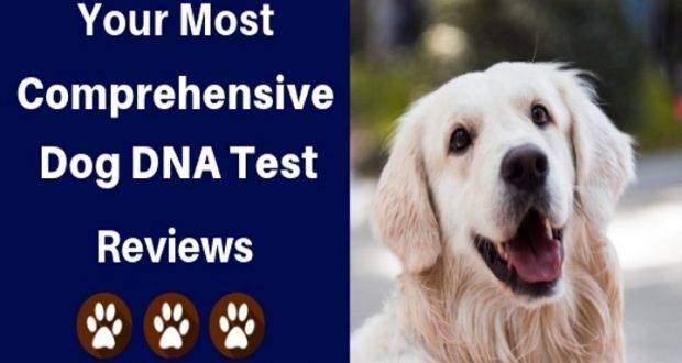 dog dna test reviews