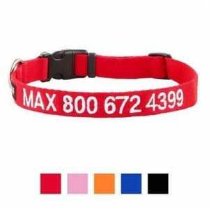 GoTags Personalized Nylon Dog Collar