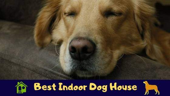 best indoor dog house review