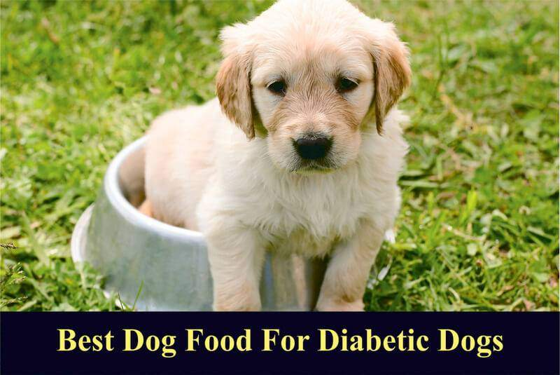 What Is The Best Dog Food For Diabetic Dogs In 2019 Reviews