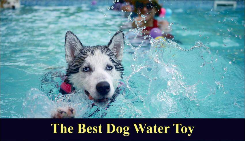 Best Dog Toys 2019 5 Best Dog Water Toys For Summer & Outdoors 2019   Totally Goldens