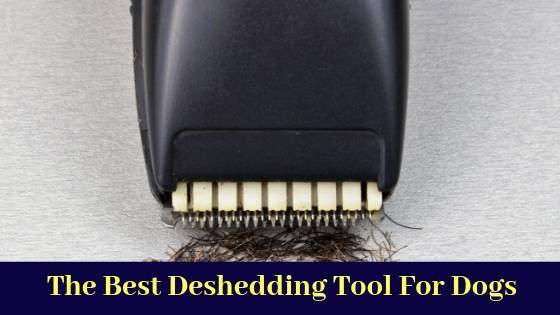 The Best Deshedding Tool For Dogs