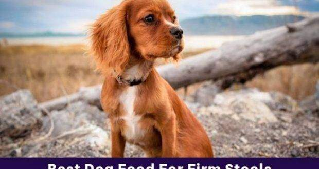 Best Dog Food For Firm Stools