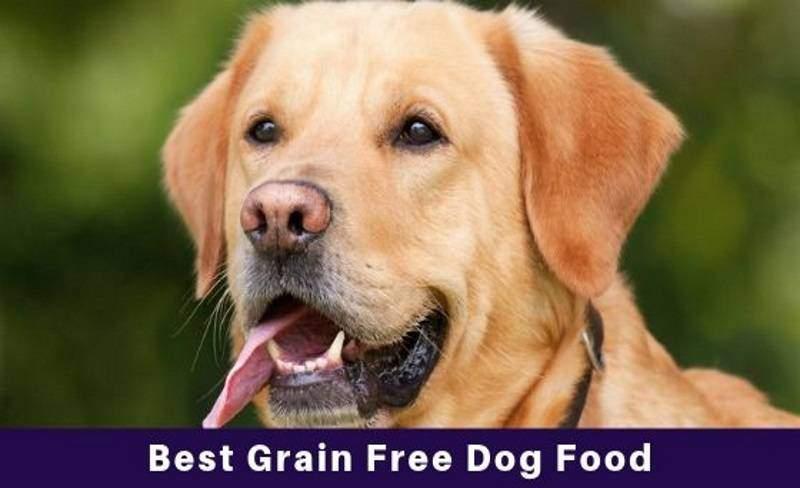 grain free dog food reviews