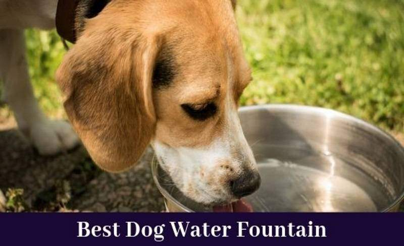 bour take on the best dog water fountain