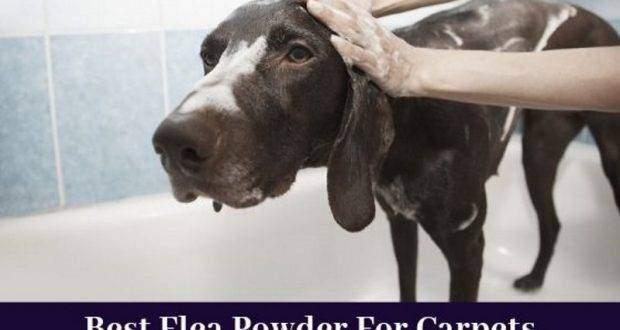 best flea powder for carpets