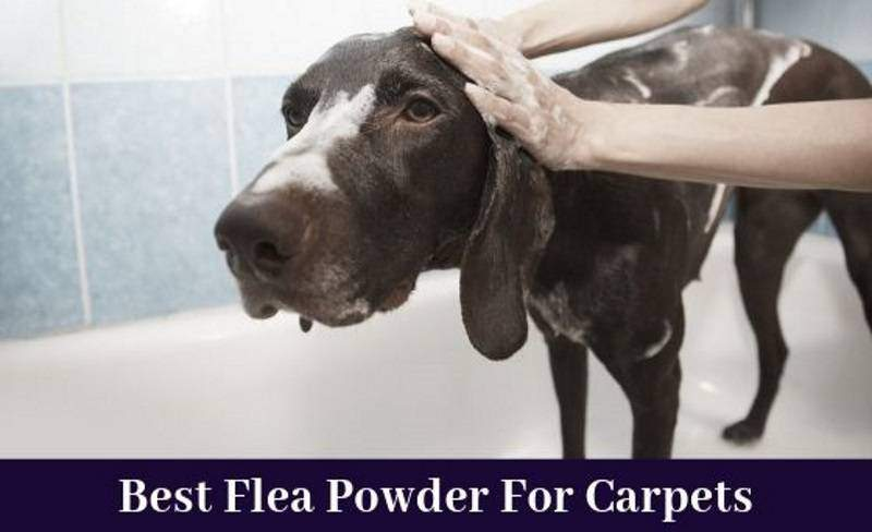best flea powder for carpets