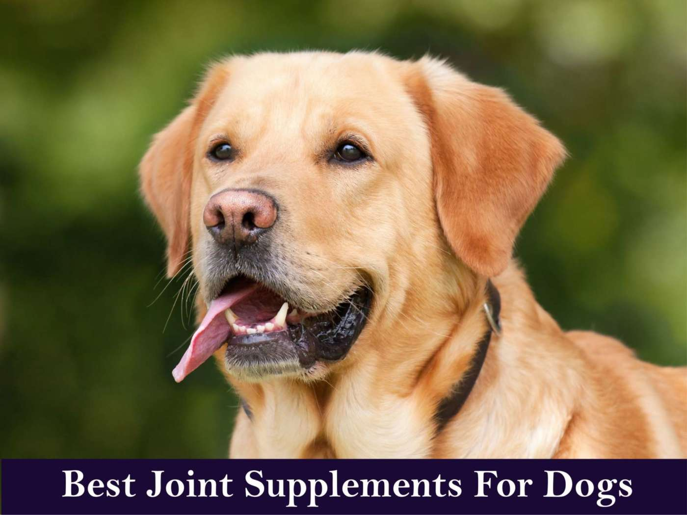 Best Joint Supplements For Dogs