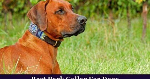 best bark collar for dogs
