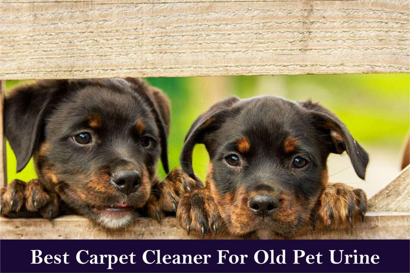 best carpet cleaner for old pet urine