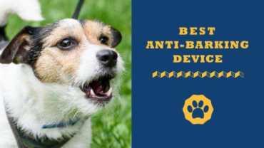best anti-barking device