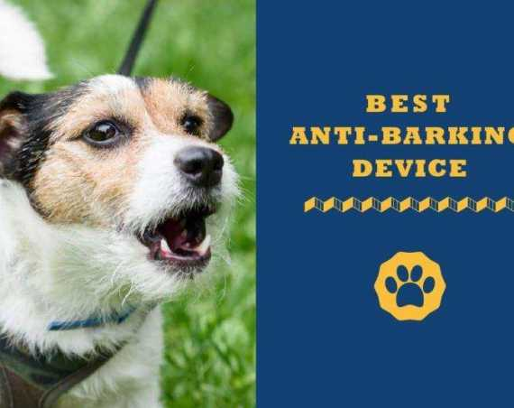 best anti-barking device