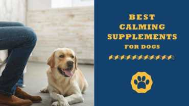 calming supplements for dour dog