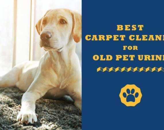 best carpet cleaners for old pet urine