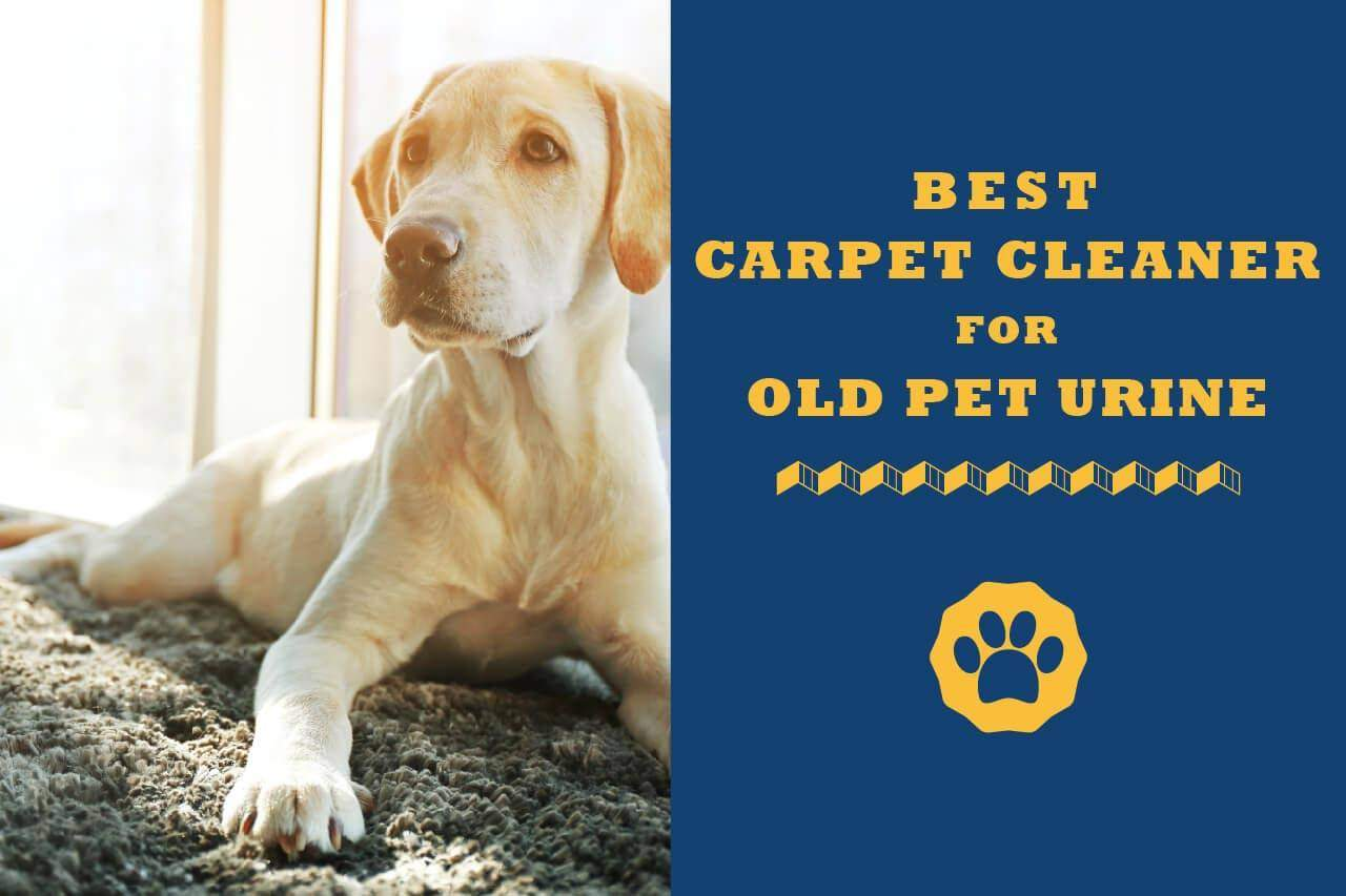 7 Best Carpet Cleaner For Old Pet Urine