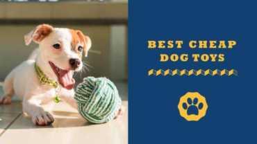best cheap dog toys