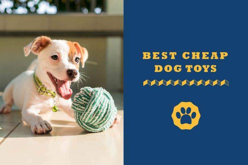 best cheap dog toys