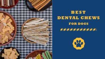 best dental chews for dogs