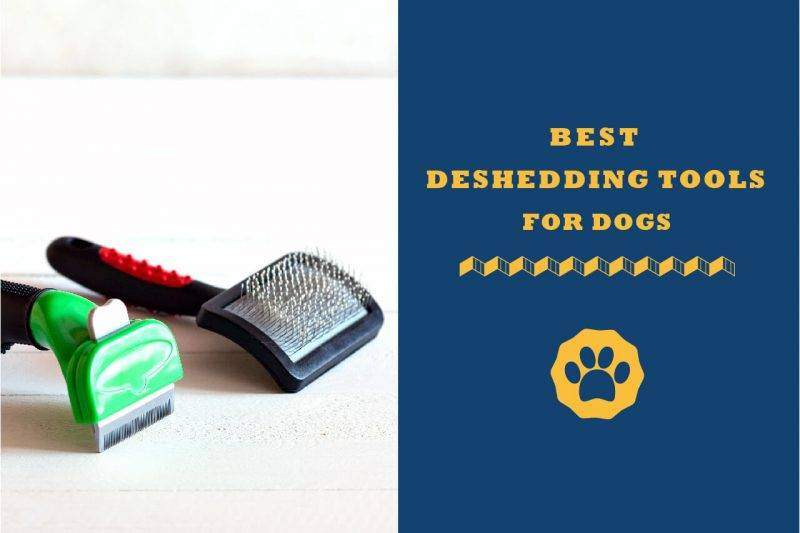 best deshedding tools for dogs