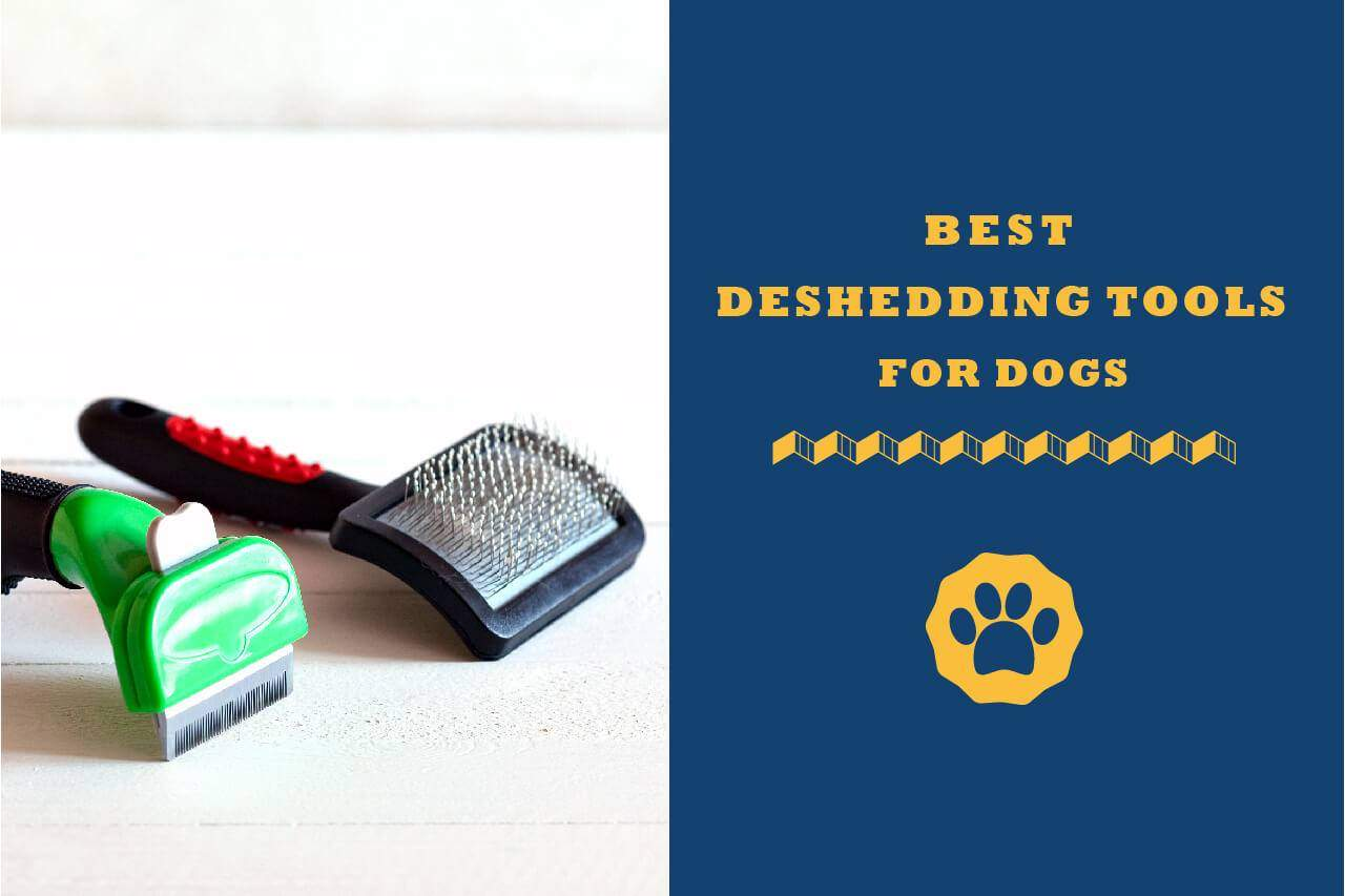 What Is The Best Deshedding Tool For Dogs 2019 Review