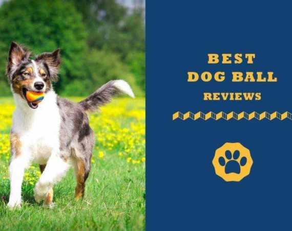best dog ball reviews