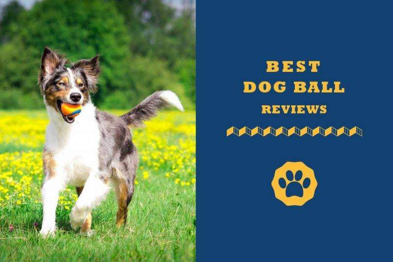 best dog ball reviews