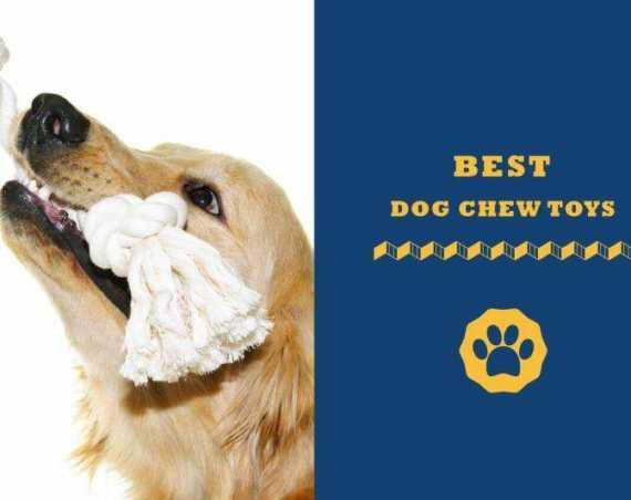 best dog chews toys