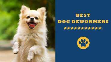 best dog dewormers