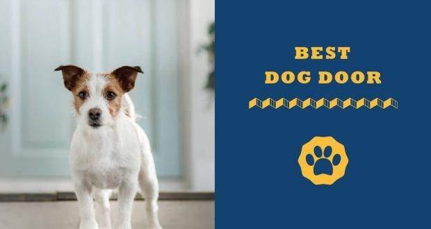 best-dog-door