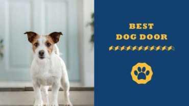 best dog door